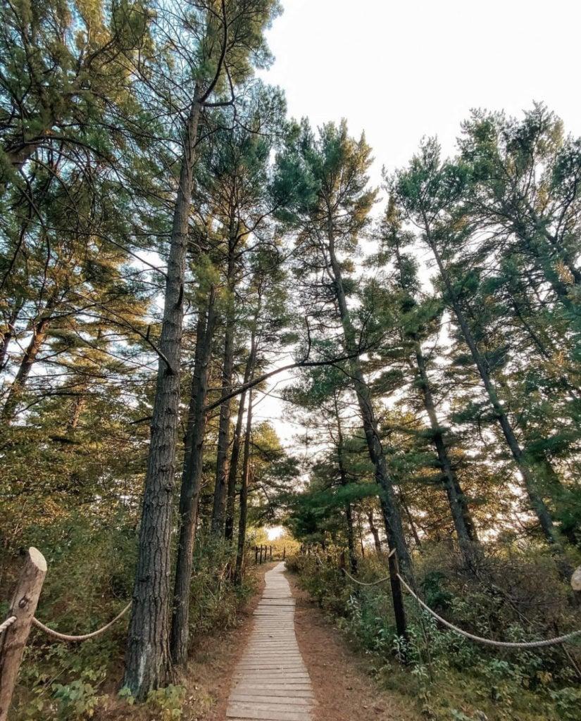 hiking trail at Kohler-Andrae State Park near Milwaukee, Wisconsin