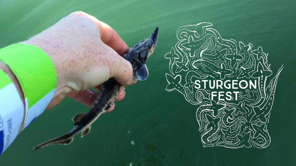 Sturgeon Fest 2021 Harbor Fest Milwaukee Wisconsin